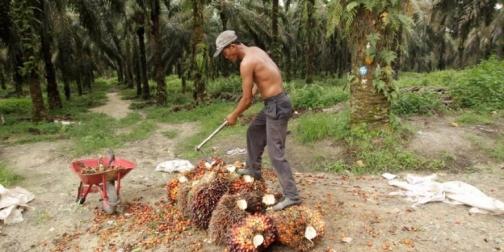 1657454-kebun-kelapa-sawit-asian-agri-di-riau-780x390
