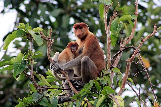 Taman_Nasional_Tanjung_Puting_03