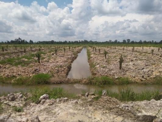 parit-filed-drain