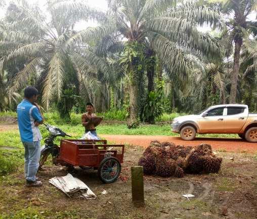 Modifikasi Motor Buat Angkut Sawit Catatan Seorang Planter